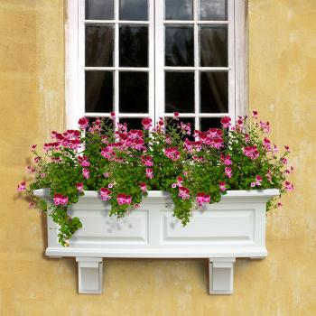Window Gardens The Lovely Plants