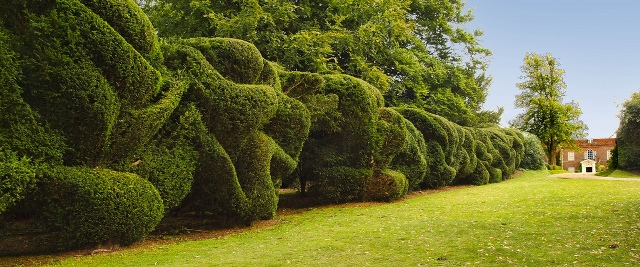 topiary clouds