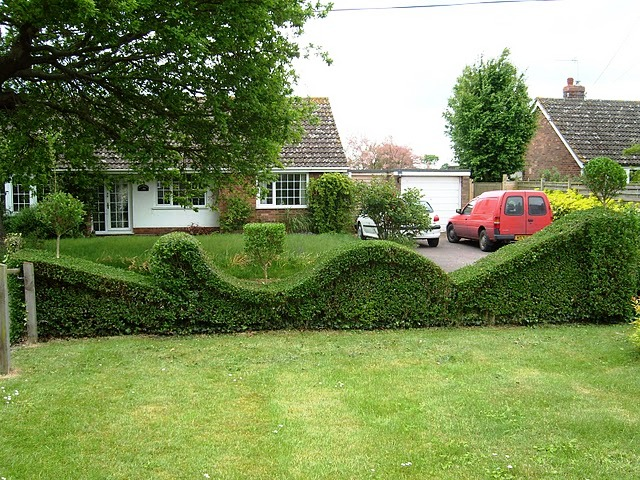 topiary hedge