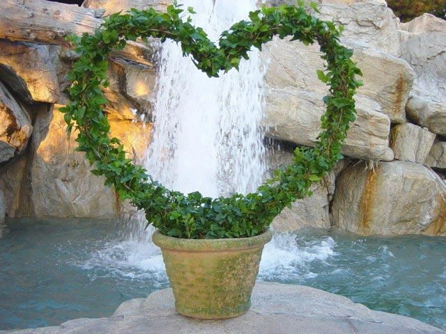 topiary ivy heart