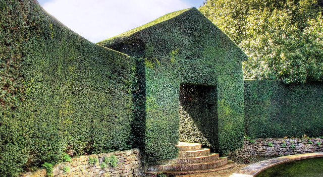 topiary wall