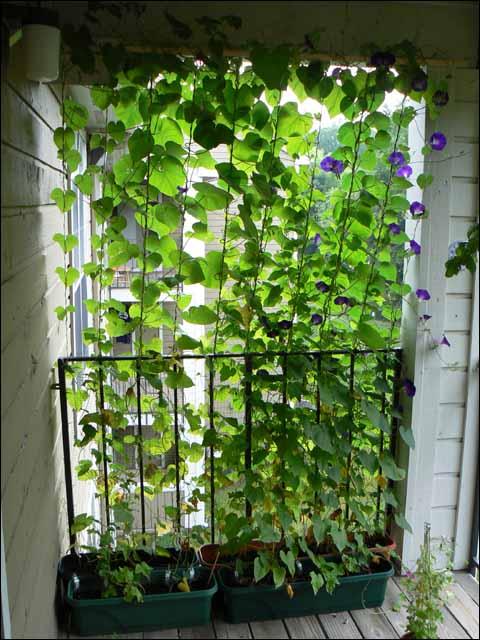 simple and cheap balcony garden