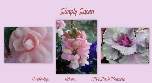 susan's garden blog