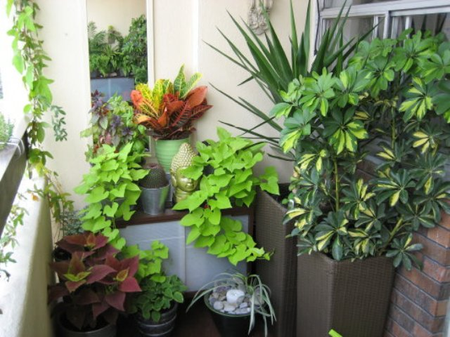 Balcony Garden - The Lovely Plants