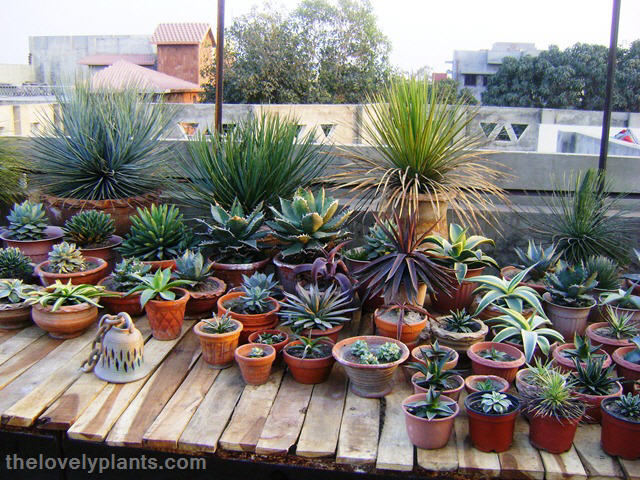 succulent driftwood designs succulents and succulent garden design