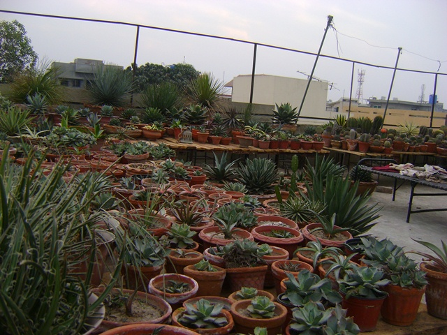 succulent garden on rooftop
