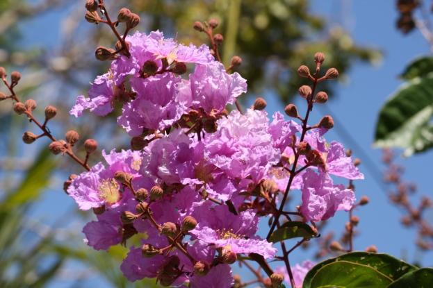 Arbustos de árboles de poda de primavera | Almanaque del Viejo Agricultor