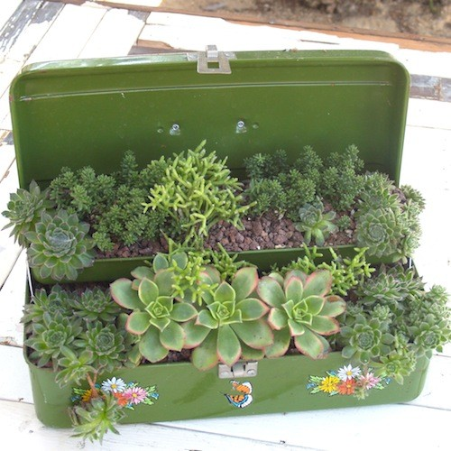 DIY Gardening with Succulents