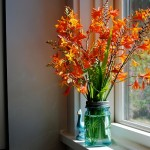 Lovely Flowering Plants for Garden Landscapes: Crocosmia