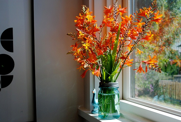 Crocosmia Flowers
