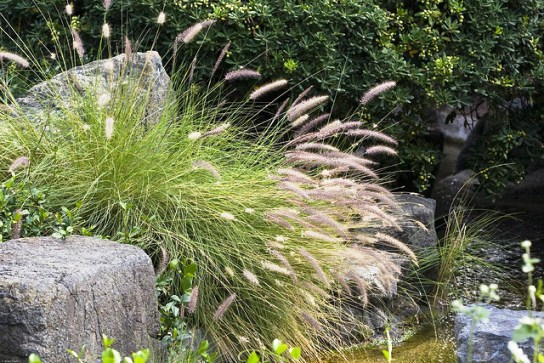 9 ornamental grasses for your garden landscape design for Blue fountain grass