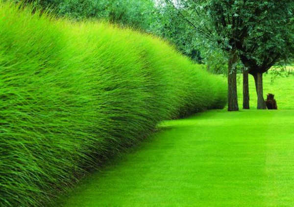 9 Ornamental Grasses for Your Garden Landscape Design - grass garden design
