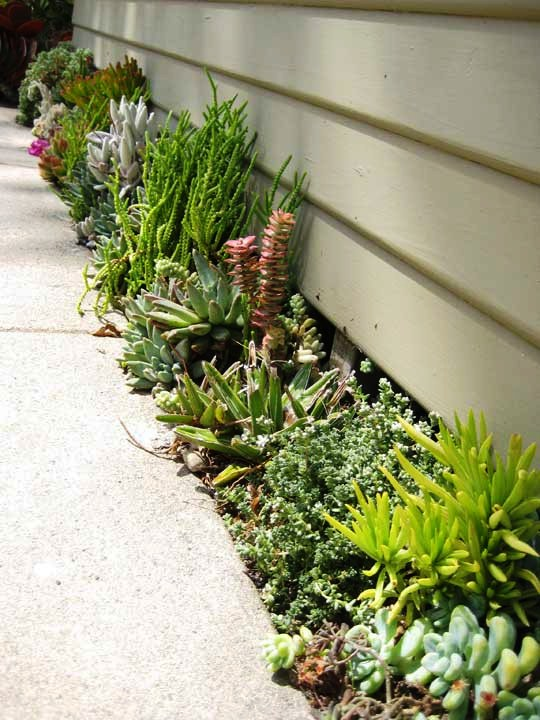 Small Space Succulent Garden The Lovely Plants