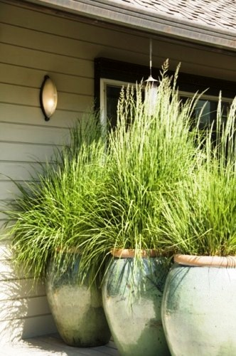 Grass in containers