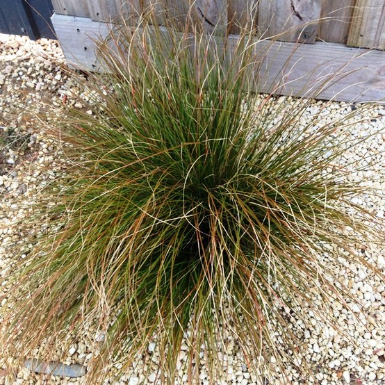 Landscaping with grasses for Hardy tall ornamental grasses