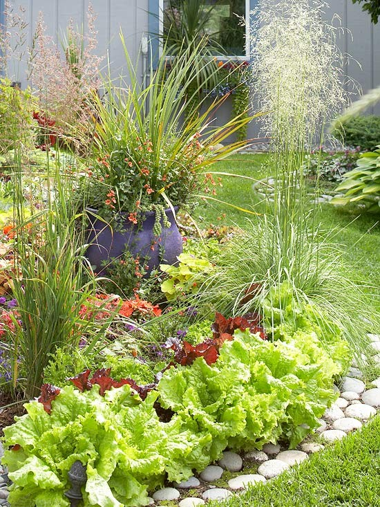 Edible Plants Border
