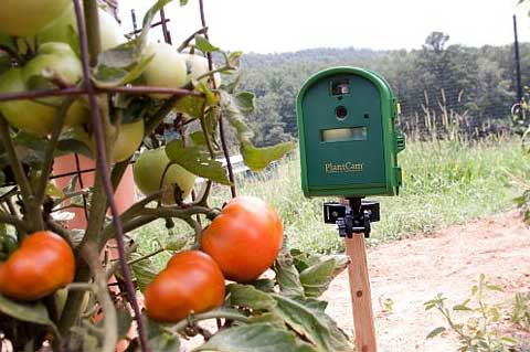 Timelapse Garden Camera