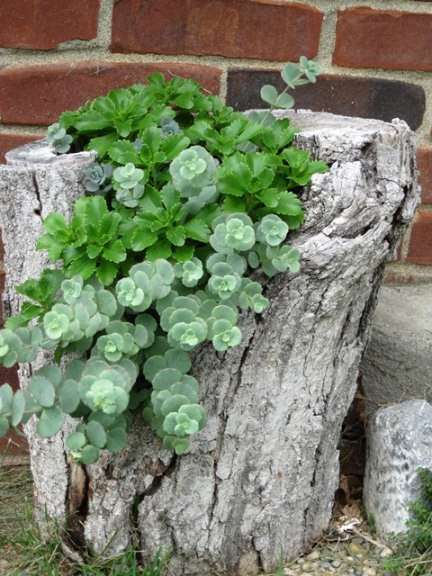 Tree Trunk Planter