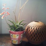 Creative DIY Gardening Idea # 17: Succulent Display
