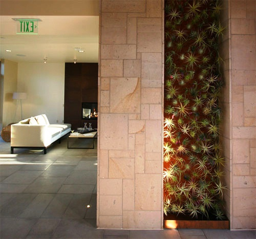 Wall Garden with Air Plants