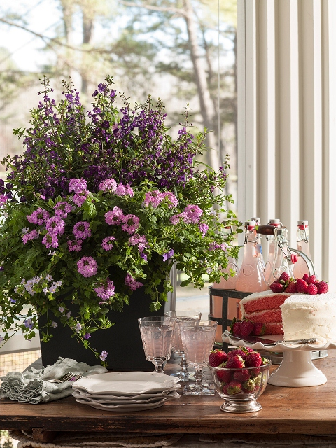Southern Living® Designer Series Container Gardens