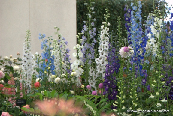 The Chelsea Flower Show 2013-2
