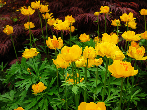 Flowers in Toronto botanical garden