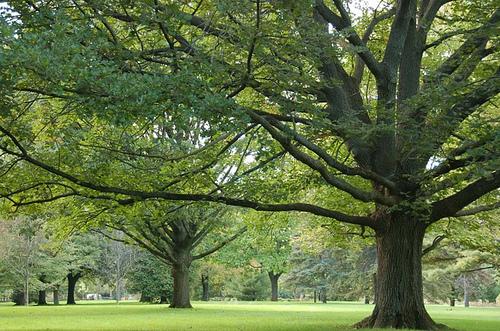trees in Toronto botanical garden