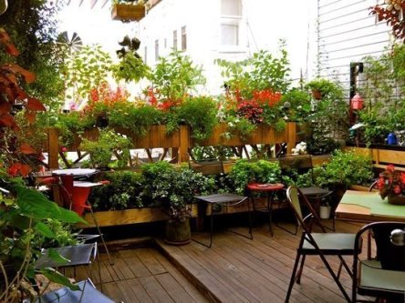Small terrace garden the lovely plants for Terrace plants