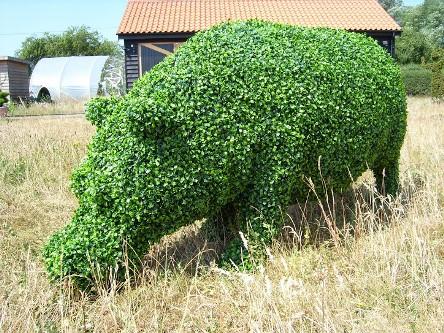 Hipo topiary