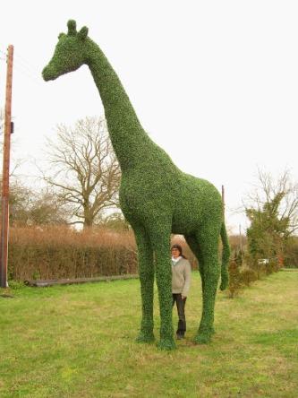 Jiraffe topiary
